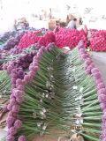Les fleurs artificielles de l'oignon fleurit des couleurs mélangées 67cm Gu-Jys-2000170