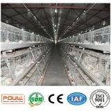 يغلفن دجاجة يتوالد مزرعة بطارية طبقة شواء قفص مع آليّة يغذّي