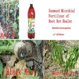 Bio organische de wortelmeststof van het zeewier voor landbouw