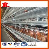 La H digita la gabbia del pollo per l'azienda agricola di pollo di strato