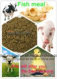 حارّ [سل-فيش] وجبة مع إرتفاع - بروتين لأنّ تغذية حيوانيّ