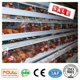 養鶏場の層の鶏のための自動鶏のケージの挿入システム