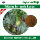 Tribulus Terrestris l сапонины сапонинов 100% чисто Terrestris Tribulus выдержки