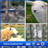 Il bestiame annoda la recinzione dell'azienda agricola della rete fissa del bestiame del metallo
