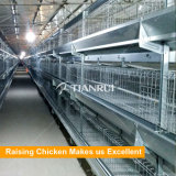 Melhor design Camadas de ovos automáticos de várias camadas Bateria de galinha