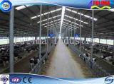 Chambre de porc/vache de structure métallique de matériel de bétail (FLM-F-019)