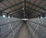 L'azienda agricola di pollo del pollame mette in gabbia la strumentazione per la pollastra calda/freddo tuffata galvanizzata (un tipo blocco per grafici)