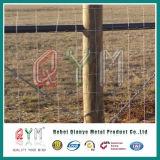Высокая растяжимая ферма ограждая строб загородки фермы поля поголовья металла провода