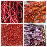Pimentões quentes vermelhos secos de Yunnan Stemless