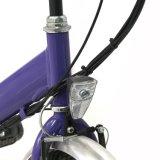 grünes elektrisches faltendes Fahrrad 250W für Verkauf