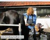 Exploración del ultrasonido del equipo de prueba de Pregnacy para el veterinario