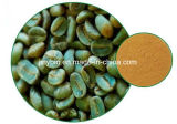 高品質の緑のコーヒー豆Extract/50%の総Chlorogenic酸