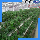 Système agricole de culture de l'eau de qualité de coût bas