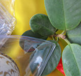 Le bijou de PVC met en sac anti - sac de clavicule de sacs mous de sacs d'oxydation soit-disant