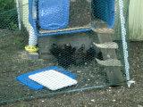 Ячеистая сеть цыплятины/шестиугольное плетение провода