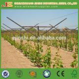 poste de la uva de la alta calidad 275g para el mercado de Canadá