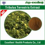100% natürliches PflanzenTribulus Terrestris Auszug-Puder