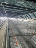Type automatique de cage de poulet