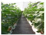 سوداء أرض تغذية مع [غرين لين] [ويد] تحصير لأنّ زراعة