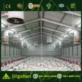 Poultry economico Raising House per l'Algeria