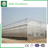 Invernadero comercial del plástico del jardín del Multi-Palmo