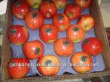 Papierform-Welpen-Frucht-verpackentellersegmente