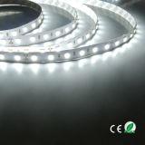 Indicatori luminosi di striscia impermeabili flessibili di IP65 DC12V 24V 300 LED 5m/Roll