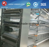 Cage automatique de poulet à rôtir de galvanisation (type de H)