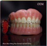 يشبع طقم أسنان مع سنة أكريليكيّ يجعل في [مينغو] مختبرة أسنانيّة