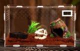 아크릴 파충류 상자 애완 동물 집은 온도 표시기와 자석 문으로 온다