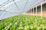 Fácil instalar la estructura de acero del precio bajo para el establecimiento del alimento