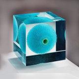 Peso de papel del lucite de acrílico cuadrado