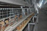 Le petit poulet (de poulette) met en cage le matériel de système de Chine