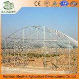 Invernadero / Invernadero de Túnel / Single-Span / Multi-Span Plastic Film para la Agricultura