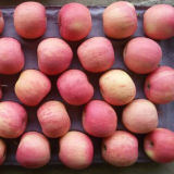 Supplier dorato di Fresh cinese Red FUJI Apple (conteggi 100-125)