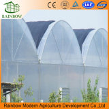 Plant와 Vegetable를 위한 직업적인 Top Quality Industrial Film Greenhouse