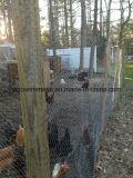 低炭素鋼鉄が付いているエレクトロによって電流を通される金網の家禽の網