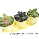Planta y flor artificiales al aire libre de gran tamaño Sinocrassula Indica