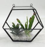 Le Terrarium artificiel de triangle plante le modèle mis en pot de Succulent de fleurs