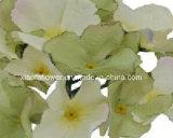 Solo vástago de la flor artificial/plástica/de seda del Hydrangea (XF30019)