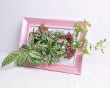 Foto Frame con Real Plants