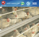 De Kooi van de Kip van de Laag van de Apparatuur van de Landbouw van het gevogelte