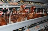 Горячее оборудование бройлера сбывания в доме цыплятины с сараем стальной структуры
