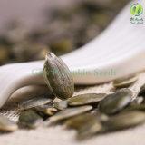 La maggior parte dei semi di zucca popolari di Gws aa ad Europa e a Amercial