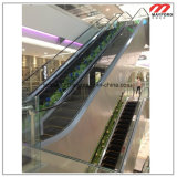 Große Supermarkt-Rolltreppe