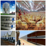 Estrutura de Aço Poultry Farm and Full Set Poultry Equipment
