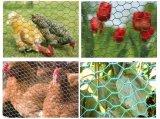 Rede de fio sextavada galvanizada da galinha