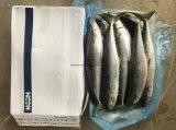 동결된 스페인 고등어 (Scomberomorus niphonius)