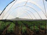 Het groene Scherm van het Bewijs van het Insect met Nieuwe HDPE 5 Jaar