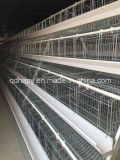 Poultry Equipment Chicken Cage De Qingdao, China